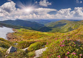 Pink rhododendron flowers on summer mountain — Stock Photo