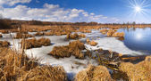 Flooded reed onthe river — Stock Photo