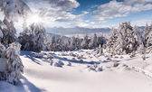 Winter in the Carpathian mountains — Stock Photo