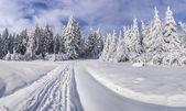 Paesaggio invernale con abeti e neve fresca. — Foto Stock