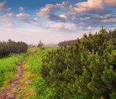 Summer morning in the forest — ストック写真