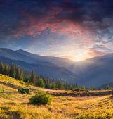 летний пейзаж в горах — Стоковое фото
