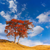 Lonely autumn tree againt sky — Photo