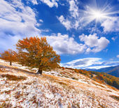 First snow in forest in mountains — Stock Photo