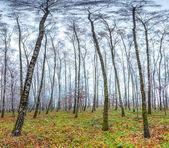 Autumn scenery in the park — Stock Photo