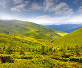 Summer landscape in the Carpathian mountains. — Stock Photo