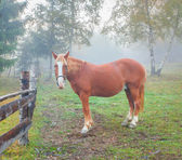 Horse in foggy forest — Stock Photo