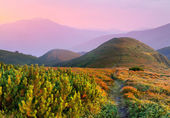 Sunset in the Carpathian mountains. — Stock Photo