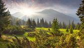 Letní krajina v horách — Stock fotografie