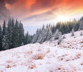 First snow in the forest — Stockfoto