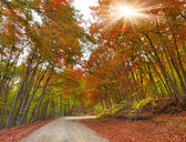 Autumn landscape in forest with old road — Photo