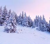 Zimowy krajobraz w górach — Zdjęcie stockowe