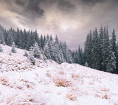 First snow in the mountain forest — Stock Photo