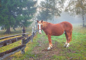 Horse in foggy forest — Stockfoto