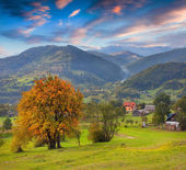 Autumn yellow trees in the mountain village — Стоковое фото