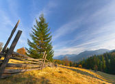 Autumn landscape with weird spruce — Stock Photo