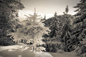 Snowfall in winter forest. — Stock Photo