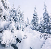 Träd täckt med rimfrost och snö — Stockfoto