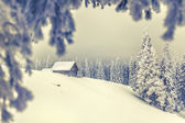 Christmas background with snowy fir trees. — Stock Photo