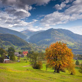 Autumn yellow trees in the mountain village — Stock Photo