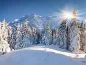 Winter landscape in the huge mountains — Stock Photo