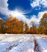 First snow in the mountain forest. — Stock Photo