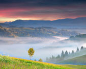 Foggy sunrise in the mountains — Stock Photo