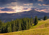 Summer  in the Carpathian mountains. — Stock Photo