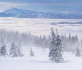 Mistige winterlandschap in bergen — Stockfoto