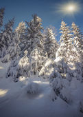 Winter landscape in the forest. — Stock Photo