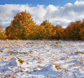 Jesień krajobraz w lesie — Zdjęcie stockowe
