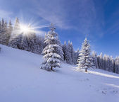 Sunny winter in the mountain forest — Stock Photo