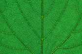 Fragment of green leaf. — Stock Photo