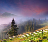 Spring landscape in the mountains. — Stock Photo