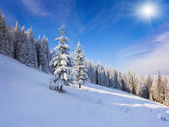 Trees covered with snow in mountains — Stock Photo