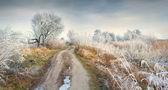 Mañana helada en bosque — Foto de Stock
