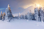 Beautiful winter sunrise in mountains. — Stock Photo