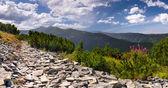 Zomer landschap in Bergen — Stockfoto