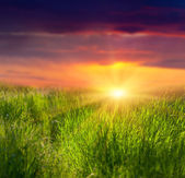 Fresh grass and dramatic sky — Stock Photo