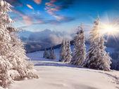 Winter zonsopgang met sneeuw bedekt bomen. — Stockfoto