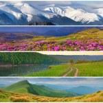 Set of the 4 seasons landscape — Stock Photo #50890001