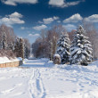 Beautiful winter landscape — Stock Photo #50890411