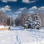 Beautiful winter landscape — Stock Photo #50890411