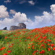 Genoese fortress with a field of blooming poppies — Stock Photo #50890613