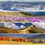 Set of the 4 seasons landscape — Stock Photo #50891837