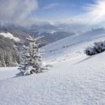 Kerstboom bedekt met sneeuw in de bergen — Stockfoto #50894089