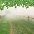 Misty morning in the village — Stock Photo #50895223