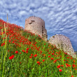Genoese fortress with a field of blooming poppies — Stock Photo #50895815