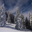 Night view of snow-covered fir trees — Stockfoto