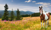 Farm horse in a pasture — Stock Photo